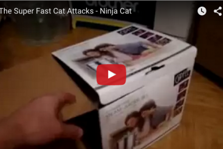 生きてるビックリ箱?飛び出す超高速猫パンチ!!