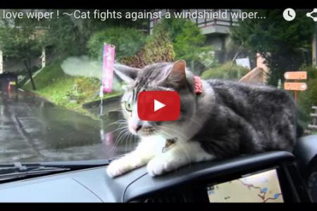 ワイパーと戦う猫!